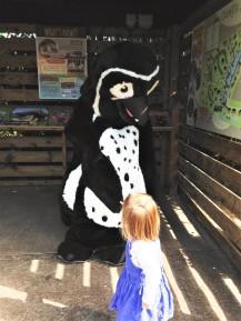 Penguin zoo